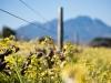 weeds-1024x6851